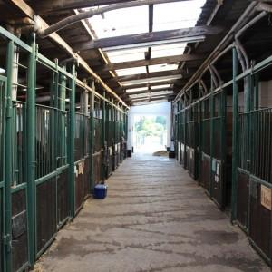 Geräumige Boxen für die Pferde